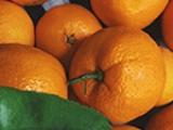 мандариновая неделя в прима виста