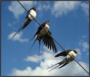 Кое-что о птицах