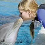 Хотели бы вы поболтать с дельфином?