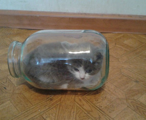 Без кота и жизнь не та: галерея питомцев «Прима Висты»