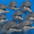 Хотите поговорить с дельфинами?  А как насчет инопланетян?